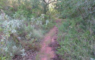 caminhada arrabida palmela serra caminhando-4