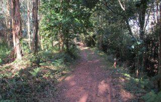 caminhadas-aveiro-pateira-fermentelos-agueda-caminhando2