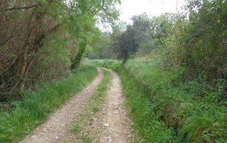 caminhadas bucelas arinto caminhando-12