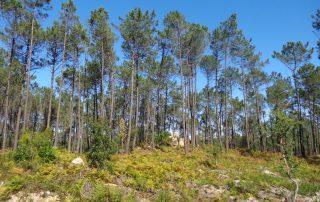 caminhadas bosques serra sintra caminhando-3