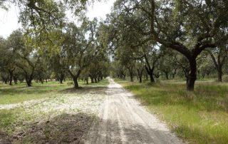 caminhadas vinhas palmela caminhando-4