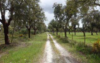 caminhadas vinhas palmela caminhando-7