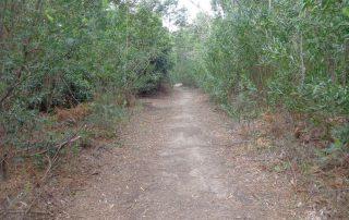 caminhada lagos monserrate rodel serra de sintra caminhando 13