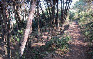 passadicos maceira vimeiro porto novo caminhando-4