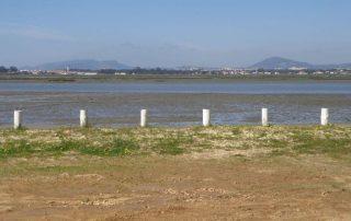 caminhada herdade da gambia estuario do sado caminhando-5
