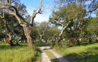 caminhada herdade da gambia estuario do sado caminhando-3