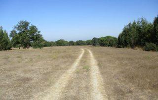 caminhadas_canha_montijo_caminhando14