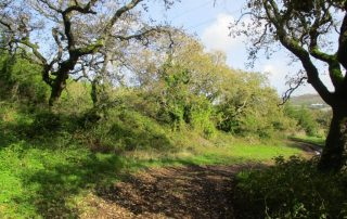 caminhada covas de ferro loures caminhando-14