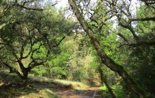 caminhada covas de ferro loures caminhando-4