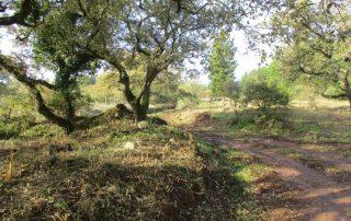 caminhada-covas-de-ferro-loures-caminhando-8