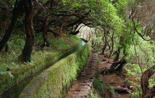 caminhadas_madeira_levadas6