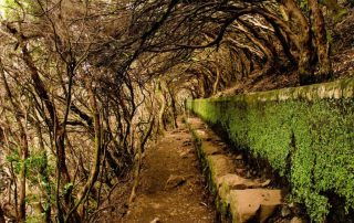 caminhadas madeira levadas caminhando-12