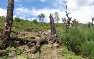 alvao cascatas vila real fisgas ermelo- ibeira pena caminhando-46