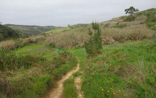 caminhada mafra lizandro caminhando-15