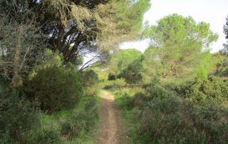 vila nogueira azeitao moinho cuco arrabida caminhando-24