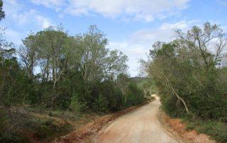 vila nogueira azeitao moinho cuco arrabida caminhando-28