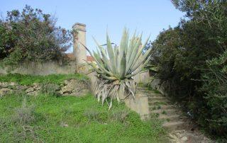 vila nogueira azeitao moinho cuco arrabida caminhando-7