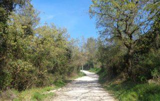 caminhadas grandes rotas alhandra caminhando-12
