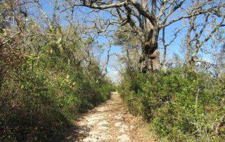 caminhada aldeia da roupa branca charneca caminhando-19