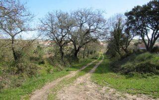 caminhada aldeia da roupa branca charneca caminhando-1