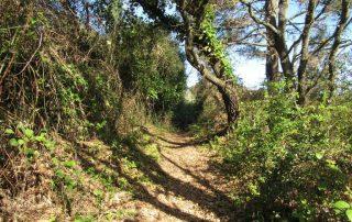 caminhada aldeia da roupa branca charneca caminhando-16