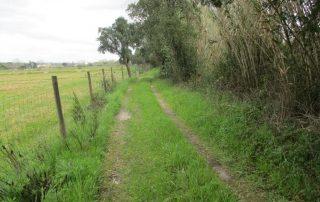 caminhada ribeira muge almeirim caminhando-14