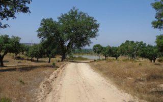 caminhada acude do gameiro parque ecologico do gameiro mora fluviario cabecao caminhando-10