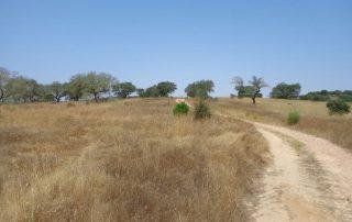 caminhada acude do gameiro parque ecologico do gameiro mora fluviario cabecao caminhando-19