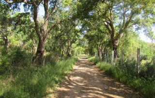 caminhada serra de grandola caminhando-8