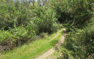 caminhada serra de grandola caminhando-24