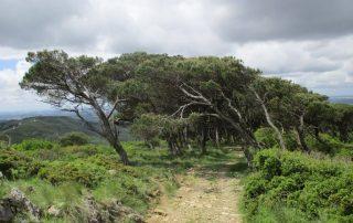 caminhada serra de montejunto caminhando-22