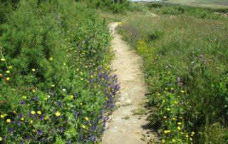 caminhada trilho costeiro areia branca caminhando