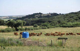 caminhada paisagem rural montado arraiolos caminhando