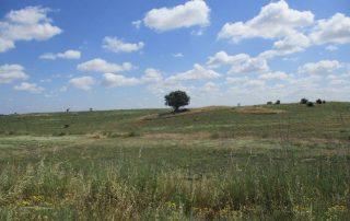 caminhada paisagem rural arraiolos caminhando