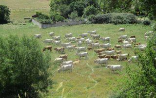caminhada ecopista paisagem rural arraiolos caminhando
