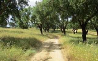 caminhada ecopista arraiolos caminhando
