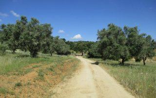 caminhada arraiolos paisagem rural caminhando
