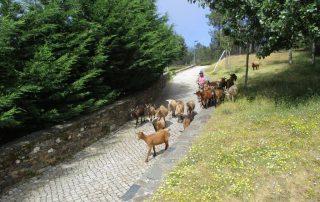caminhada aldeias xisto aigra velha gois caminhando