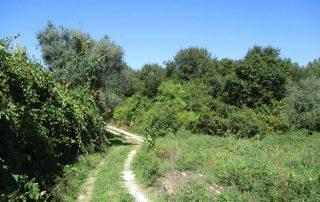 caminhada-oliveira-de-frades-cascatas-caminhando-30
