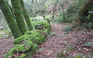 caminhada-oliveira-de-frades-cascatas-caminhando-28
