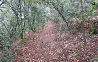 caminhada-oliveira-de-frades-cascatas-caminhando-21