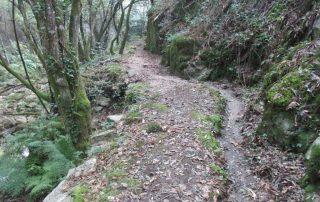 caminhada-oliveira-de-frades-cascatas-caminhando-8