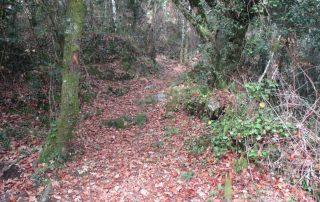 caminhada-oliveira-de-frades-cascatas-caminhando-18