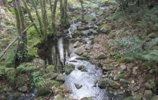 caminhada-oliveira-de-frades-cascatas-caminhando-2