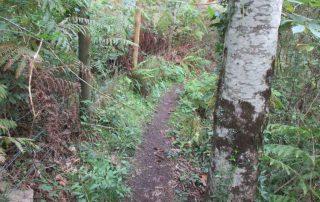 caminhada-oliveira-de-frades-cascatas-caminhando-16