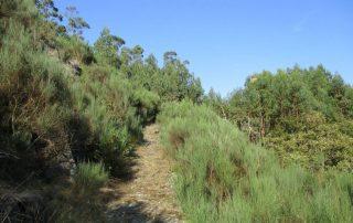 caminhada rio vouga oliveira de frades souto lafoes caminhando