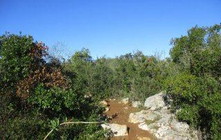 caminhada baloiço do talegre serra de alburitel ourem caminhando
