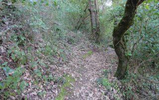 caminhada sobral de monte agraco alqueidao bosques caminhando