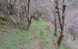 caminhada torre de moncorvo rota lagos do sabor amendoeiras caminhando