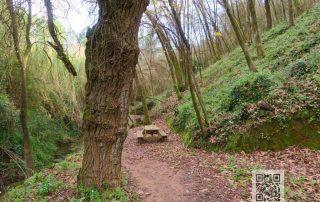 caminhada trilho da amazonia maceira leiria
